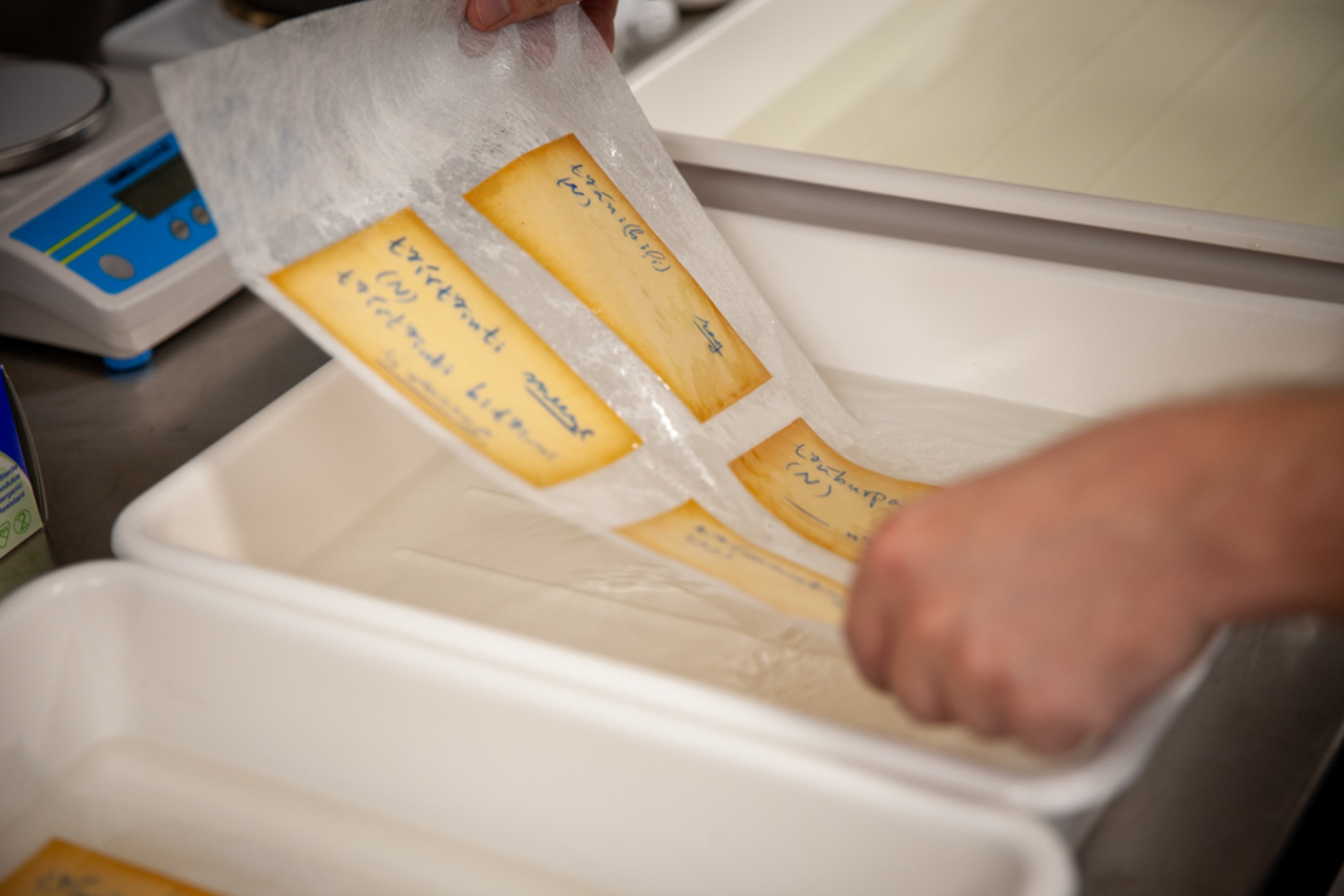 Language cards undergoing conservation treatment